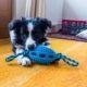 Die Auswirkungen von COVID-19 auf Hunde und andere Tiere
