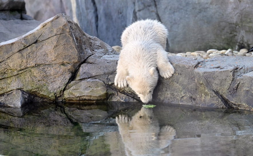Tiergarten Schönbrunn darf ab 15. Mai 2020 öffnen
