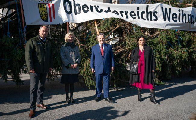 Die Suche nach dem richtigen Baum beschäftigte die oberösterreichische Landesforstdirektion