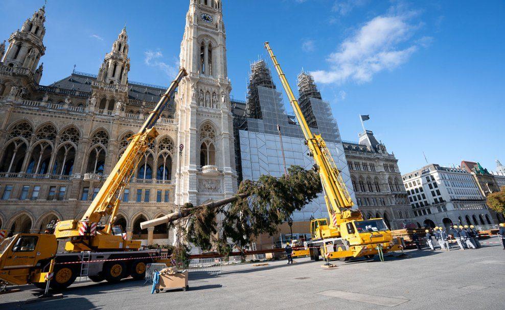 Mit Hilfe zweier Kräne wurde Christbaum am Rathausplatz aufgerichtet