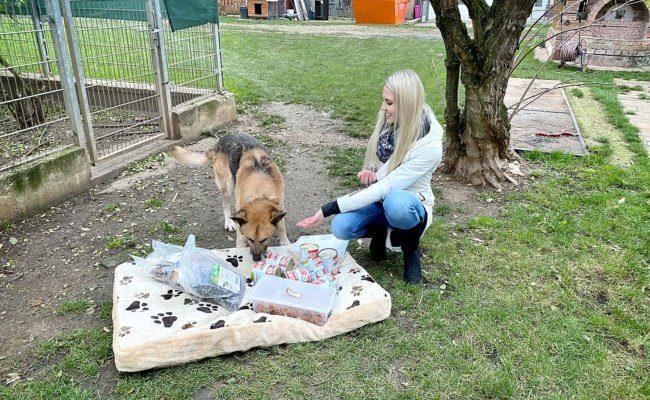 """Weihnachtspackerl von Tierreich für Schäferhund """"Opi"""""""